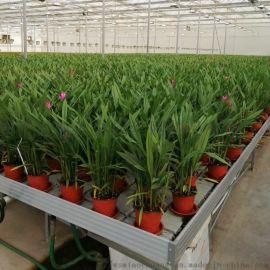 温室大棚运用潮汐式苗床技术优势-ABS环保材质