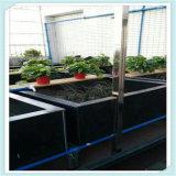 PVC保温产床围栏板 养猪场围栏 厂家直销
