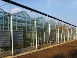 薄膜温室,日光温室,蔬菜大棚,生态餐厅