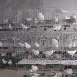 鍍鋅三層/四層養殖肉鴿籠-雙柏絲網