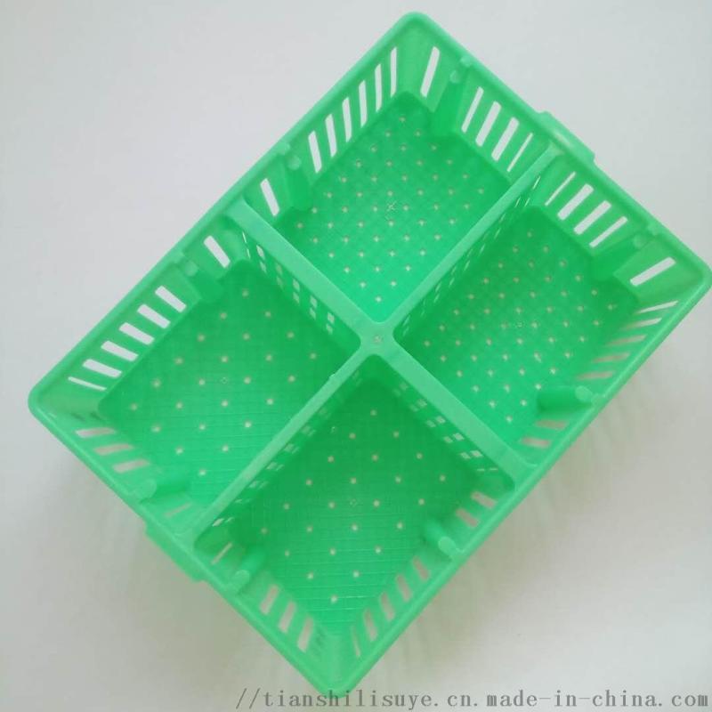 厂家供应塑料鸡苗箱 带隔断鸡苗箱 鸡苗运输箱