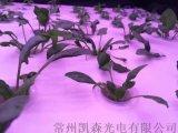 LED植物燈育苗,溫室補光無頻閃