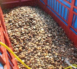 贵州杂色鹅卵石主要基地  鹅卵石厂家