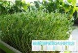 哪能够学习芽苗菜的培育方法-益康园