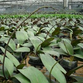 无土基质栽培连栋薄膜温室花卉种植大棚
