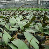 無土基質栽培連棟薄膜溫室花卉種植大棚