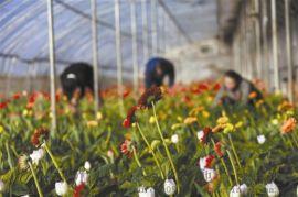 简易薄膜连栋温室,蔬菜温室大棚,花卉温室大棚