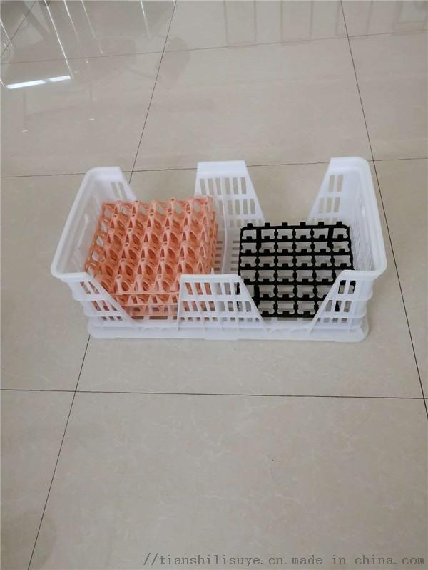 新式塑料种蛋筐 塑料隔板蛋筐 运输用塑料种蛋筐
