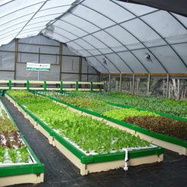 城市觀光現代農業生態養殖魚菜共生溫室