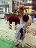 羊驼厂家 羊驼价格
