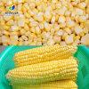 新鮮甜玉米脫粒機 電動不鏽鋼玉米分離機 產量大