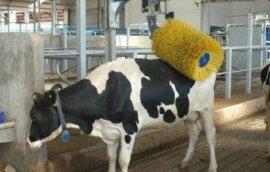 牛体刷|畜牧机械用毛刷|奶牛清洗用毛刷