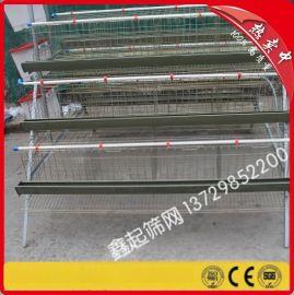 阶梯式鸡笼 鸡笼配件 环保蛋鸡笼 金属鸡笼 自动养殖 量大从优