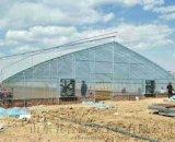 濰坊WH實用型單棟溫室