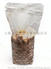 香菇菌棒出口 上海誠營有機椎茸