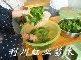 树叶能做豆腐吗/豆腐树叶能