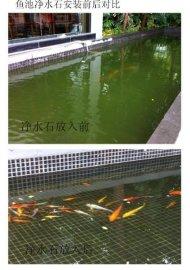 深圳金鲤鱼池微生物净水剂