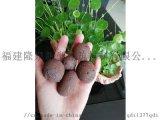 泉州 建築陶粒 頁岩陶粒、粘土陶粒、園林陶粒