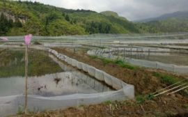 全新料生产40目加厚青蛙养殖网厂定做家直供