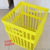 廠家熱銷塑料種蛋筐 大種蛋筐圖片 鴨種蛋塑料筐報價