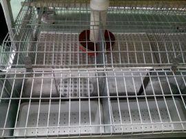 兔子笼子批发养殖兔子笼子