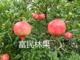 新鲜水果 富民软籽石榴薄皮多汁特产精品礼盒