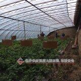 樱桃温室大棚冬季远红外取暖保温加热板热耐德品牌
