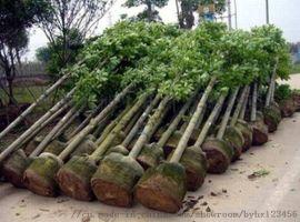 河北特价哪家生产的植树袋批发