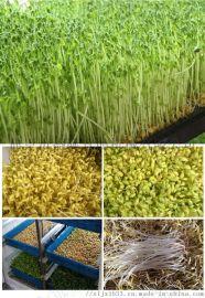 绿豆芽生产设备 河北自动豆芽机报价 盛隆厂家直销