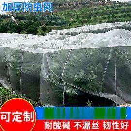 40目-80目60聚乙烯防虫网 海南加厚防虫网 农业种植尼龙防虫围网