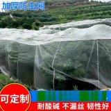 40目-80目60聚乙烯防蟲網 海南加厚防蟲網 農業種植尼龍防蟲圍網
