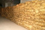 哪里有高产大蒜种子卖