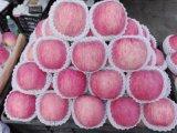 江南莞香水果市場