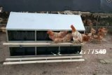 散养鸡产蛋箱  24穴产蛋箱厂家
