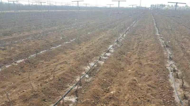 滴灌管材廠家果樹滴灌管蔬菜滴灌管廠家直銷河南省滴灌管技術