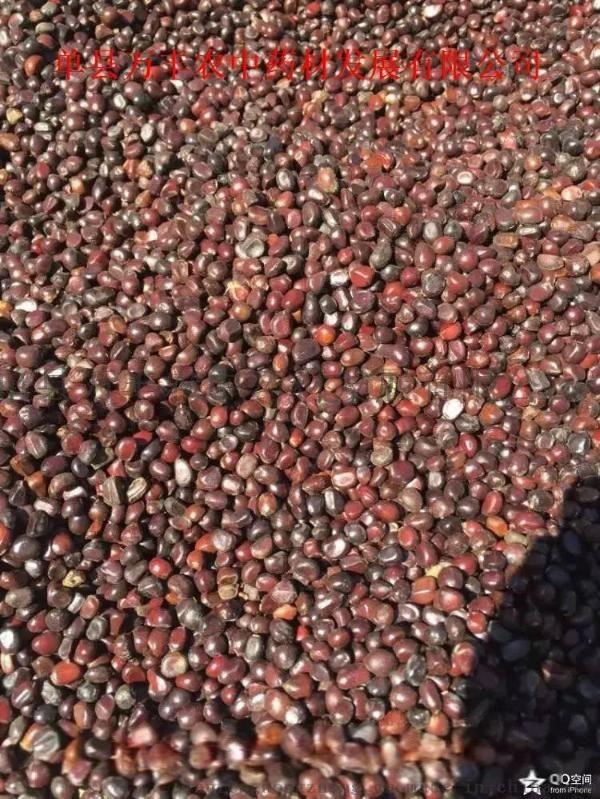 赤芍種苗量大從優質量保證