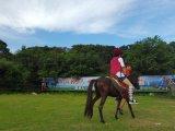 深圳騎馬怎樣讓馬停下來