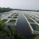 水蛭養殖基地,還獨創水蛭網箱養殖法,解決網想養殖