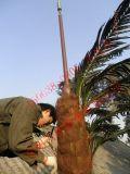 15米仿生松樹避雷針廠家,10米模擬樹避雷針塔