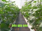 万亩防草布厂家地布防草使用黑色防草布用途
