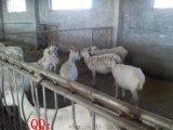 塑料漏粪地板价格,羊用漏粪地板,厂家直销可回收