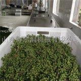 大涼山 保鮮花椒生產線 連續式花椒加工流水線品牌