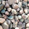 本格廠家供應 園路鋪裝河卵石 人工溪流鵝卵石