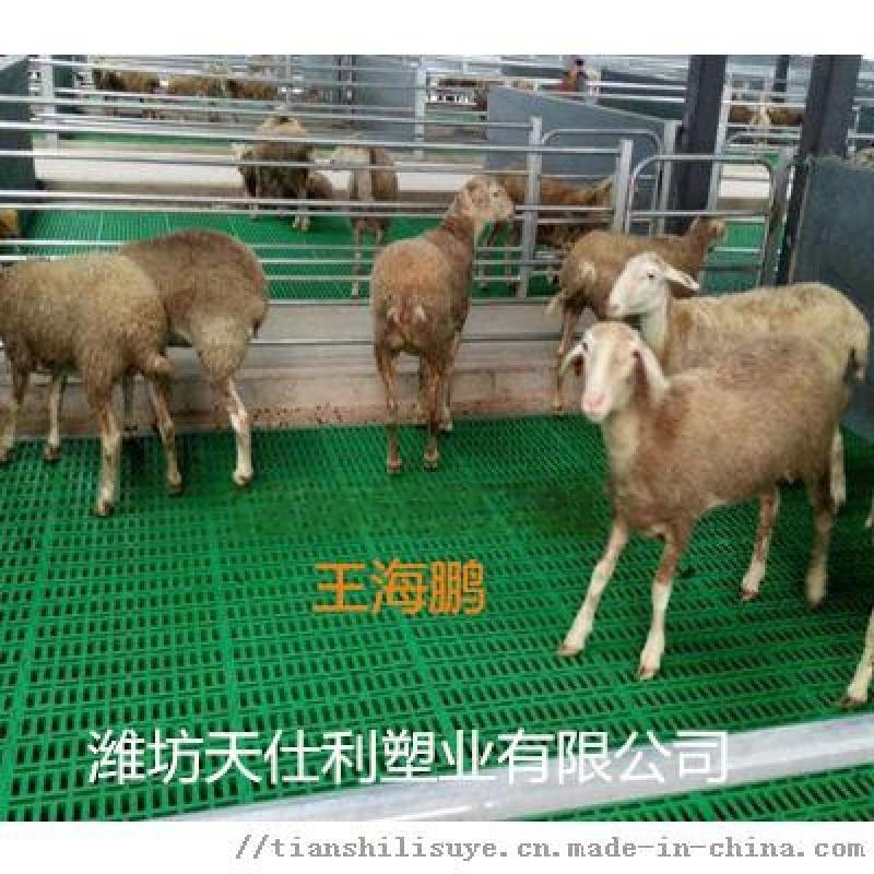 供应羊用漏粪板 塑料羊漏粪板产品制造 羊床漏粪板