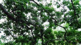 汇生林业**上说的扶贫是真的吗?