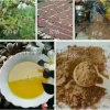 茶麸洗发水,广西巴马云南小黄姜洗发水