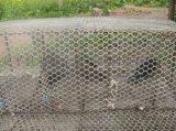 养鸡护栏网,镀锌护栏网,护栏网厂