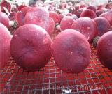 高产季节如何快速烘干香菇并保证菇型和色泽