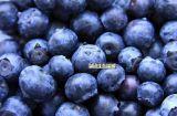 供进口浓缩果汁蓝莓浓缩汁