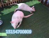 俊辉萌宠互动暖场动物租赁动物表演出租